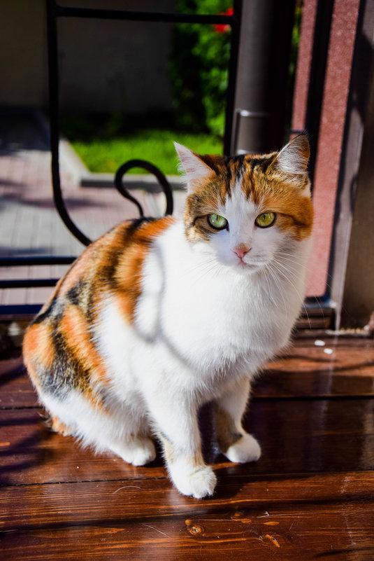 Каждая кошка внутри тигрица - Вячеслав Ларионов