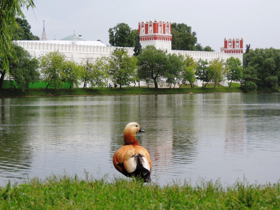 Новодевичий монастырь - Елена Ом