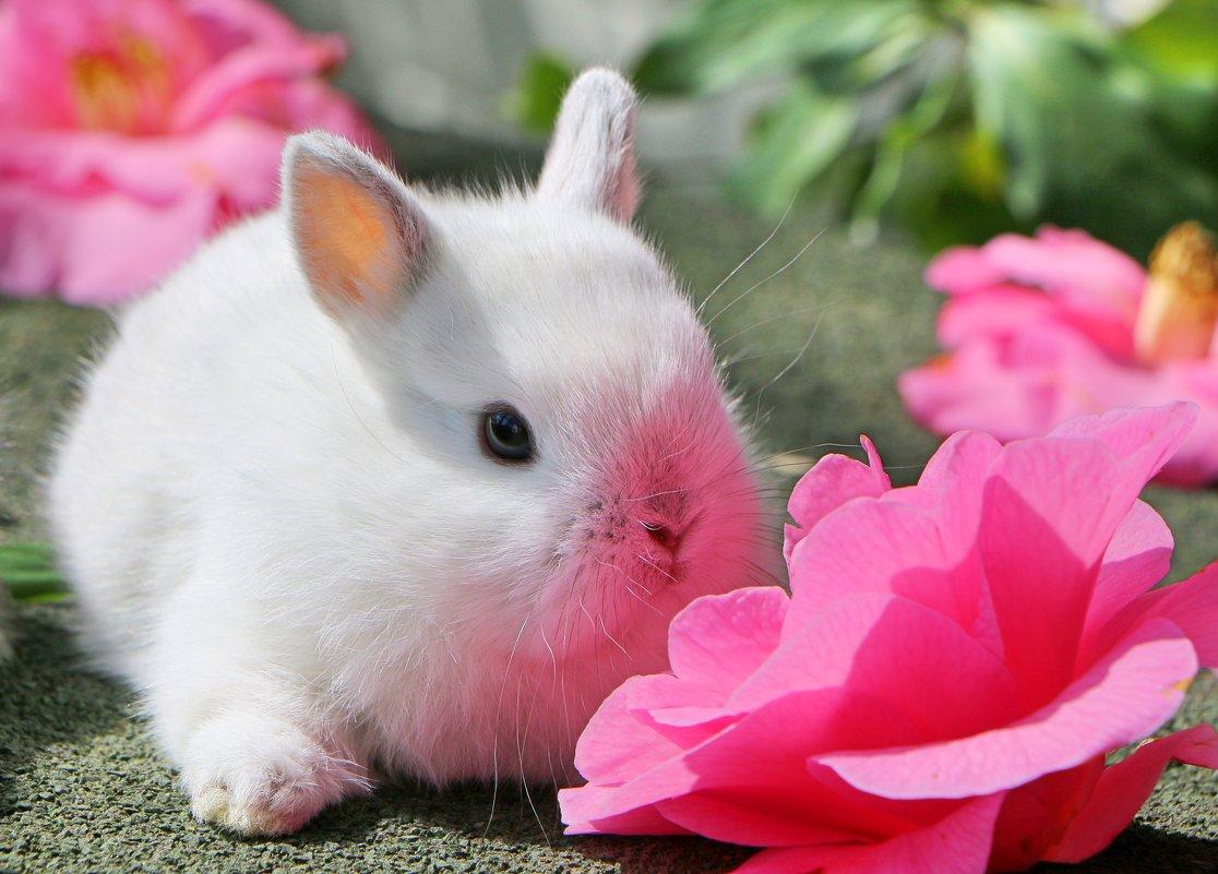 цветочный зайчик - Natalya секрет