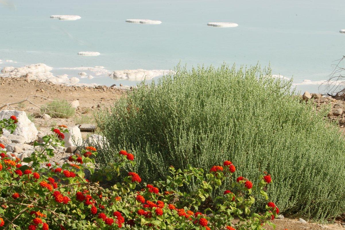 берег Мёртвого моря - Содомского моря - vasya-starik Старик