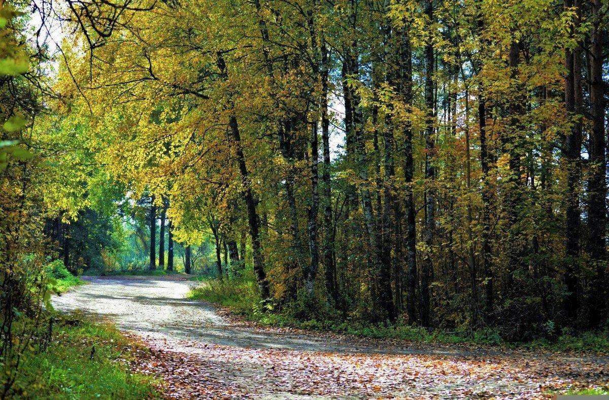 Осенний день в лесу. - Новиков Игорь