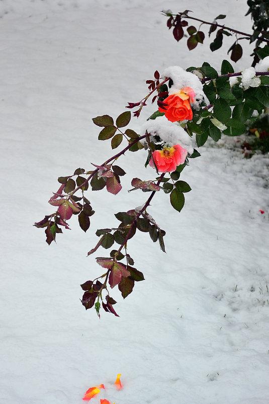 Первый снег - Вячеслав Платонов
