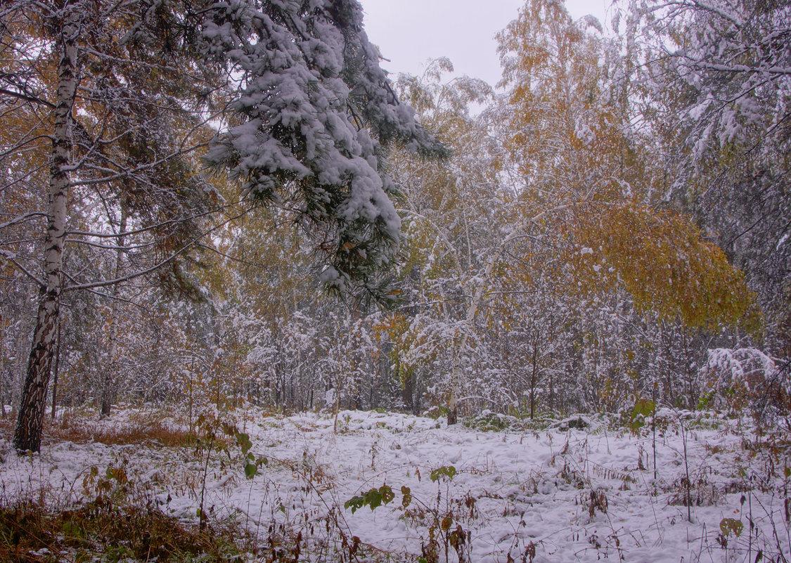Первый снег---13 - Владимир Холодный