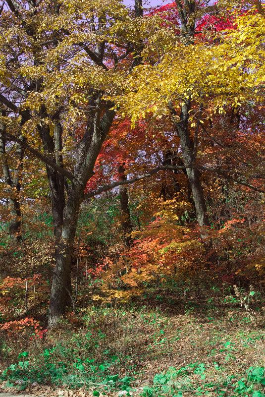 Осенний пейзаж - Евгений Поварёнков
