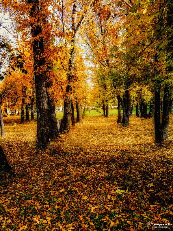 В парке 3 - Вячеслав Баширов