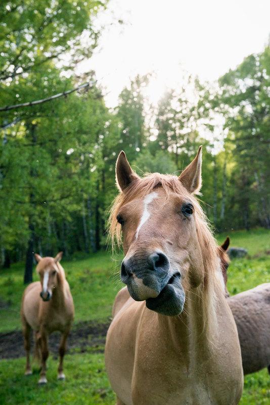 морда лошади - Наталья Буданова