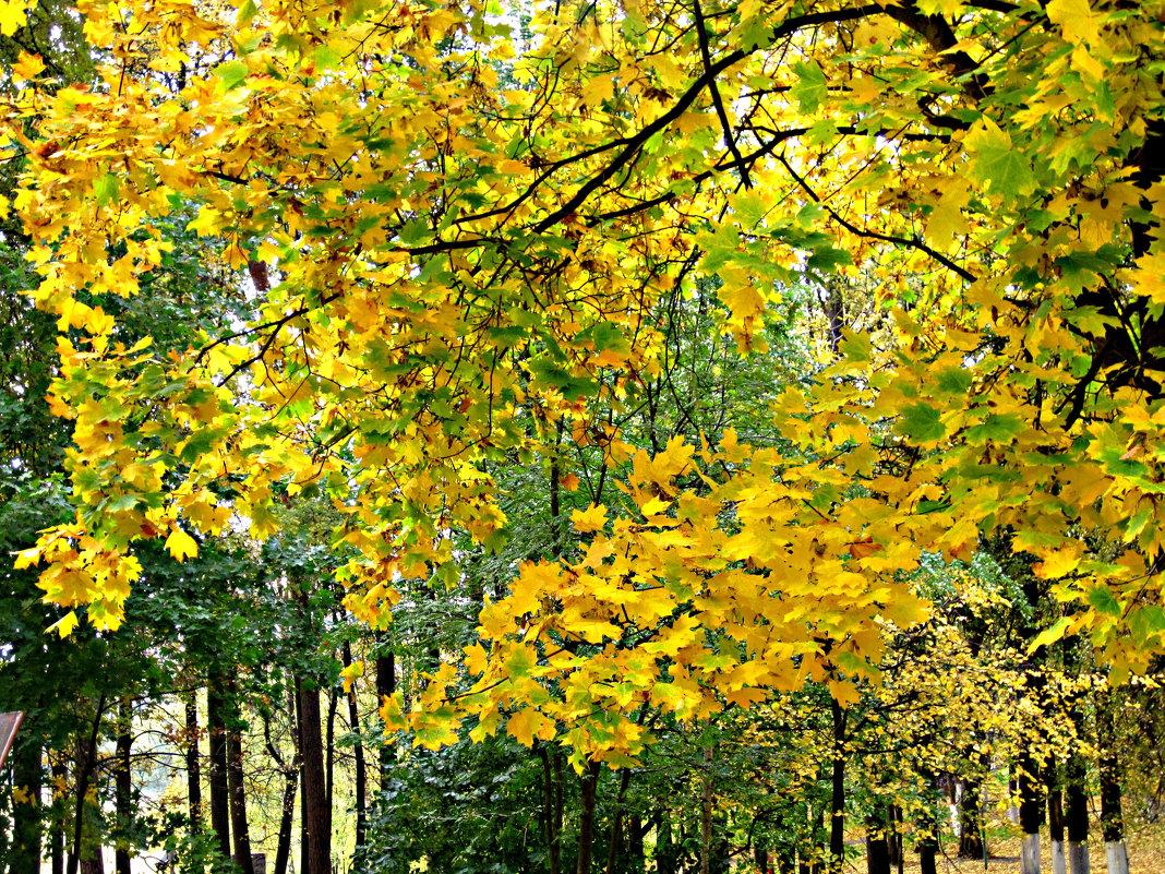 Осень золотая - Елена Семигина