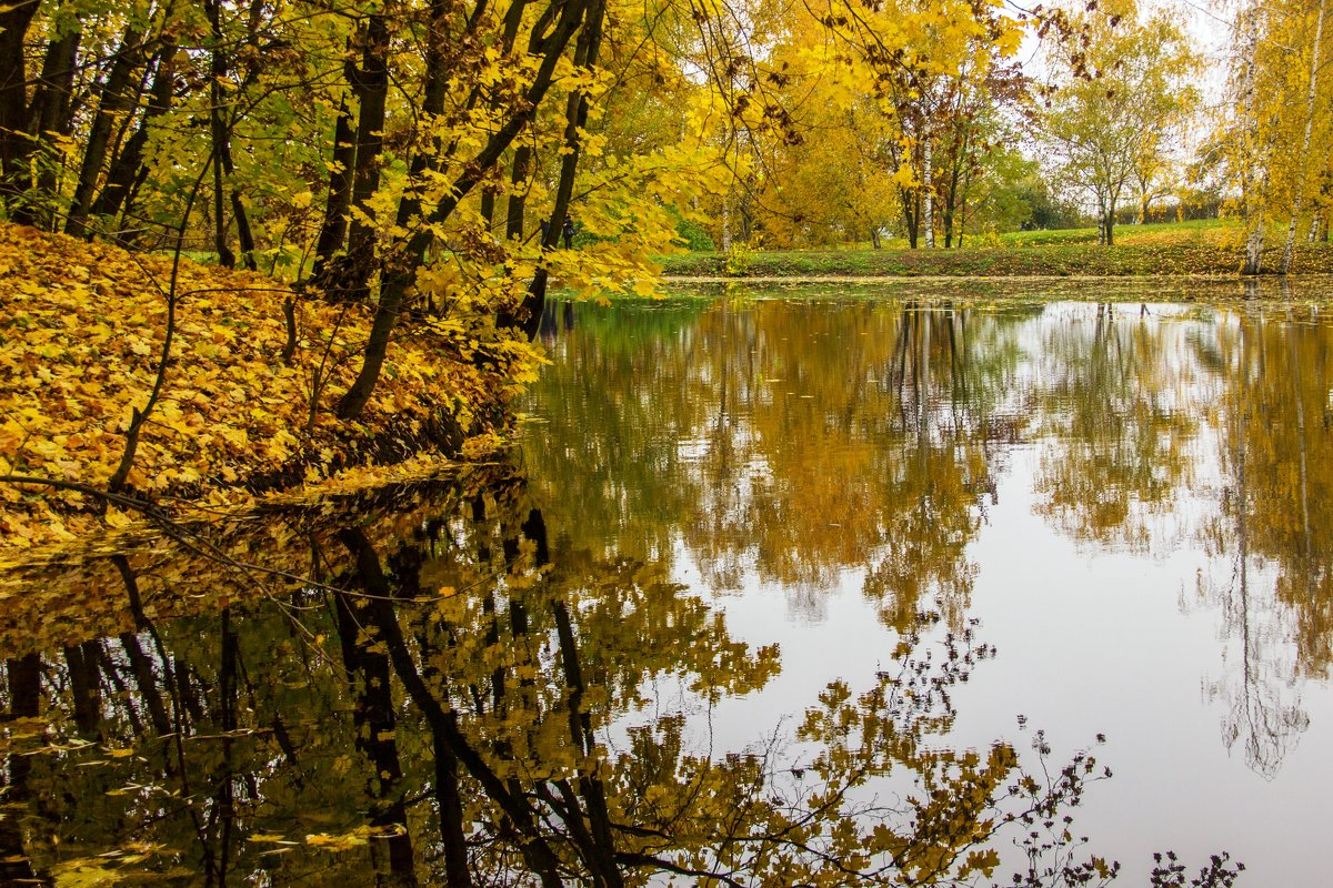 Золотой парк - Кирилл Кошед