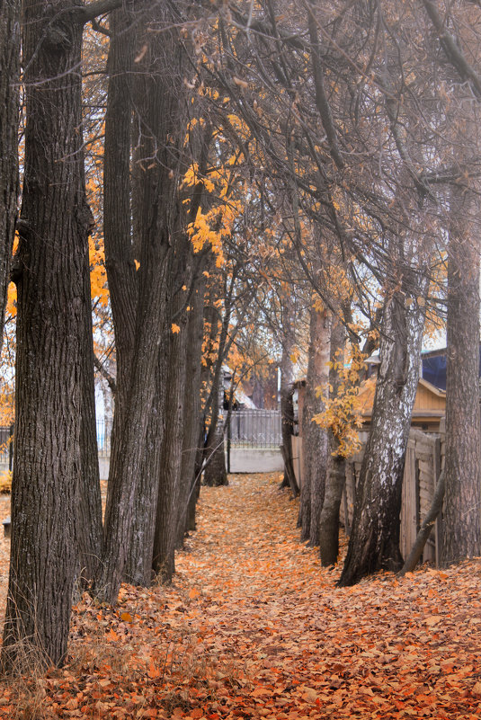 Название осенний парк - Лариса Тарасова