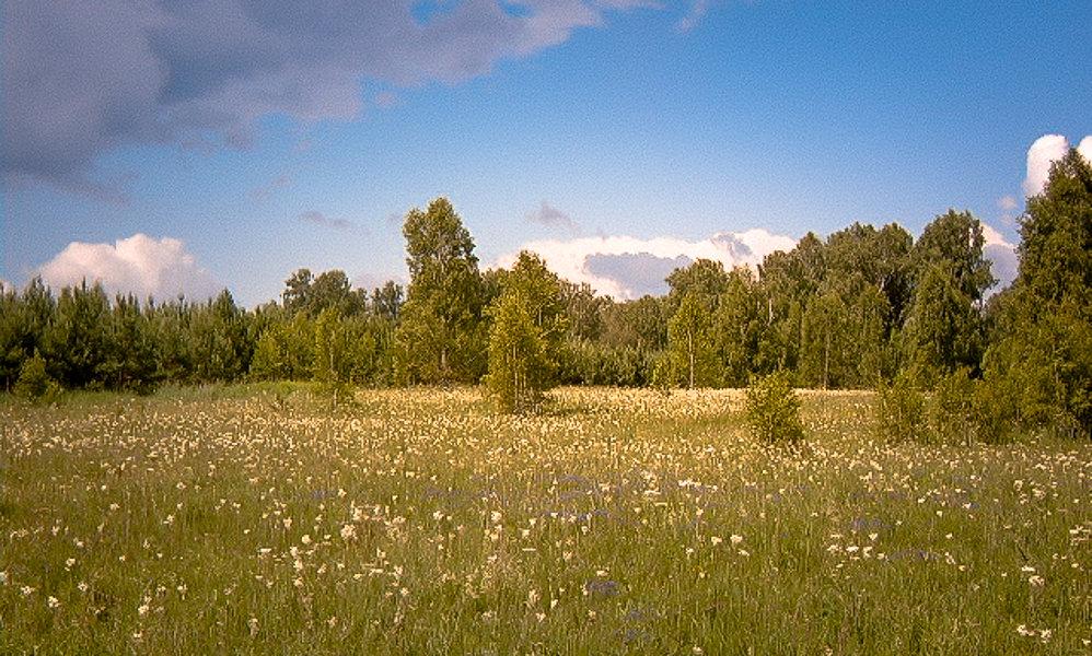 Ромашковое поле - Лариса Димитрова