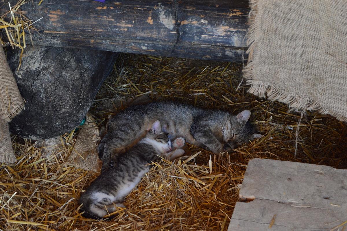 Эти заМУРчательные кошки... - Ирина Рачкова