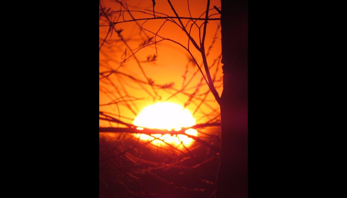 Солнышко в гнездышке - Екатерина