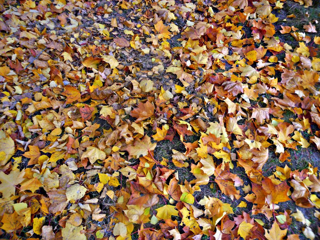 на ковре из желтых листьев... - Людмила