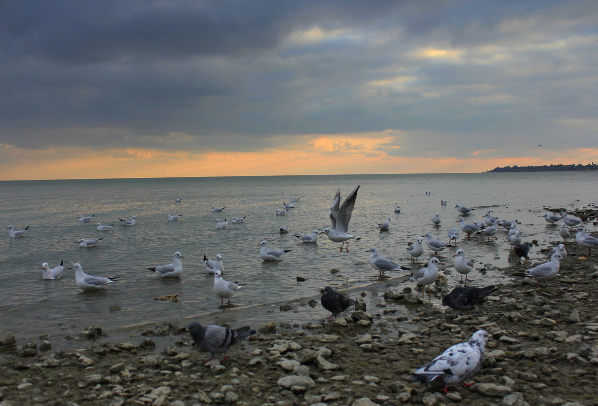 Приморский пляж - оксана косатенко