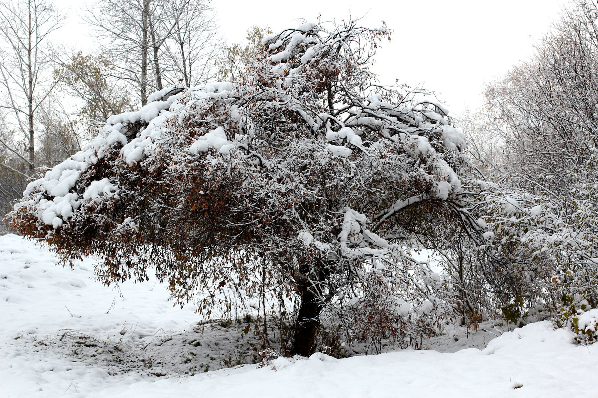 Первый снег - Радмир Арсеньев