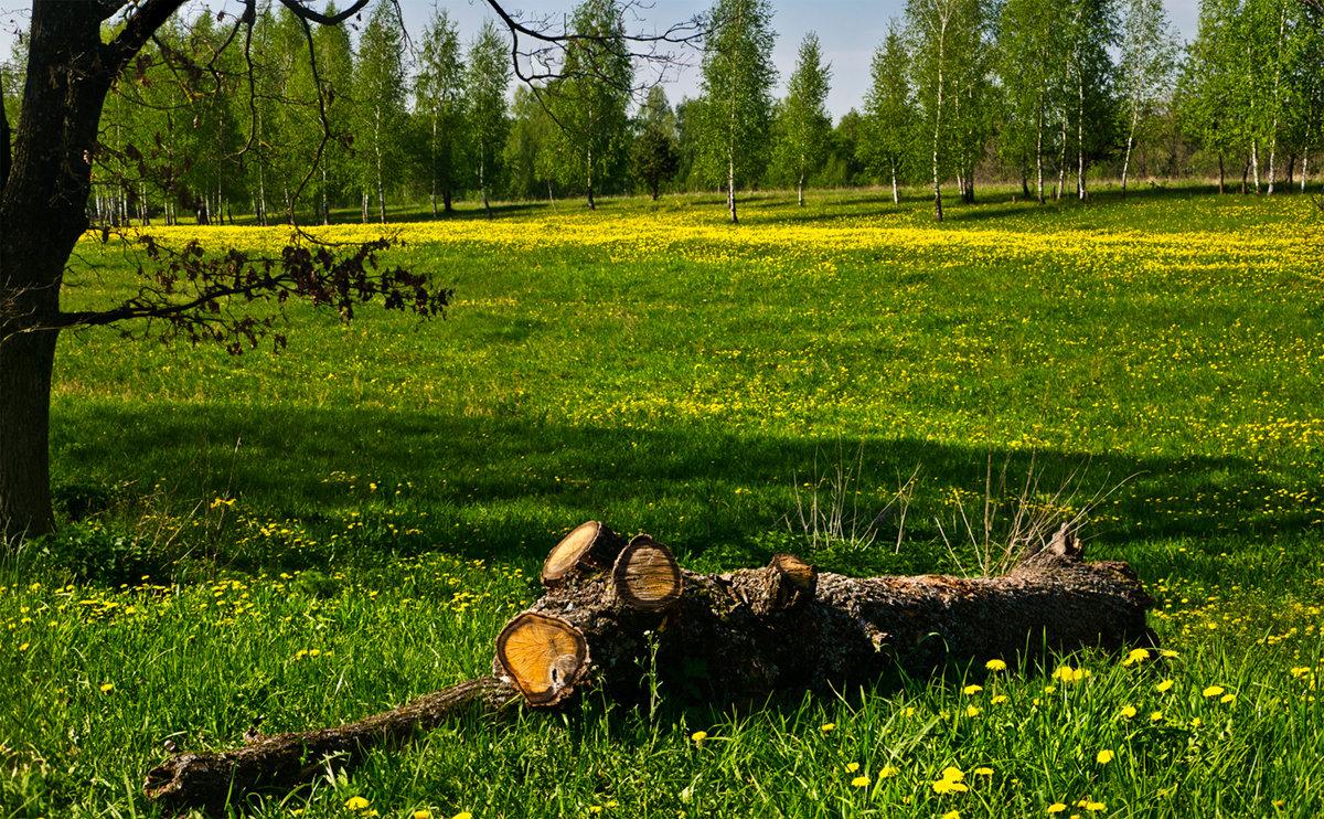 Весенний этюд - Александр Березуцкий (nevant60)