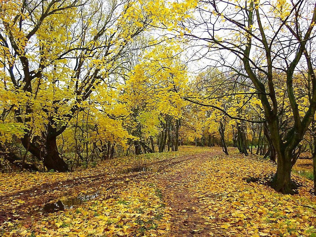 Городской парк в октябре - Маргарита Батырева