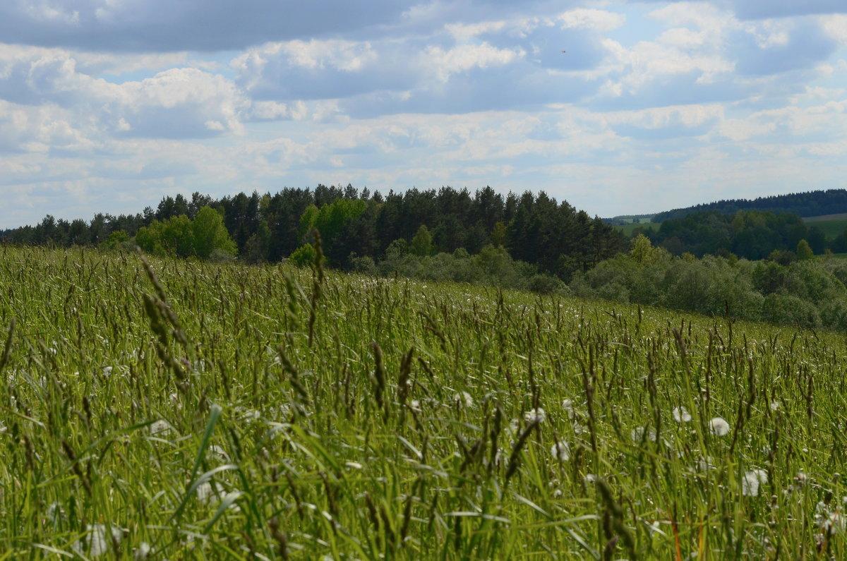 На дальней станции саиду, трава по пояс .... - евген03 Левкович