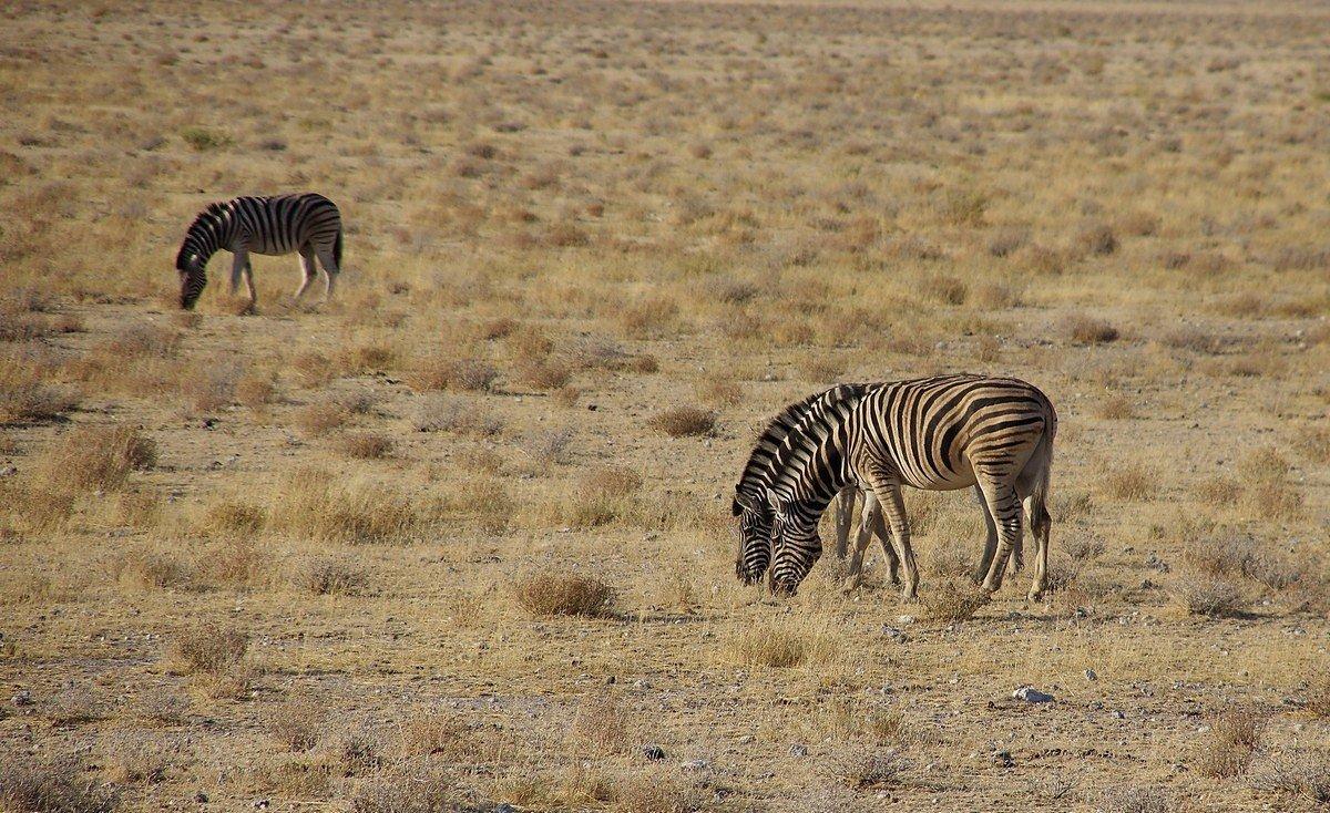 Намибия - Михаил Рогожин