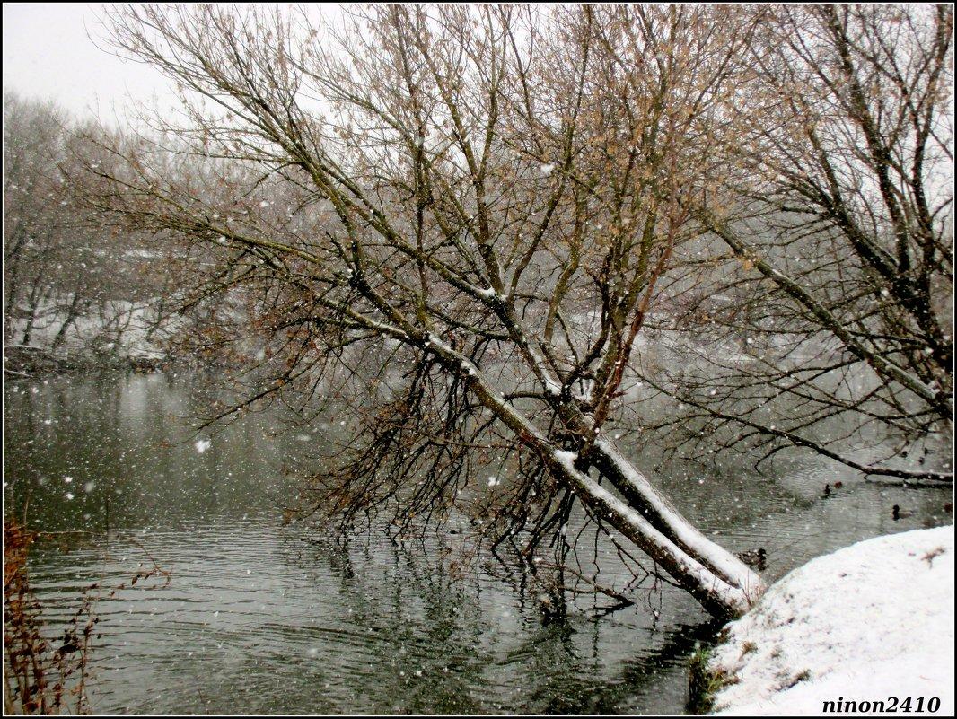 Снегопад - Нина Бутко