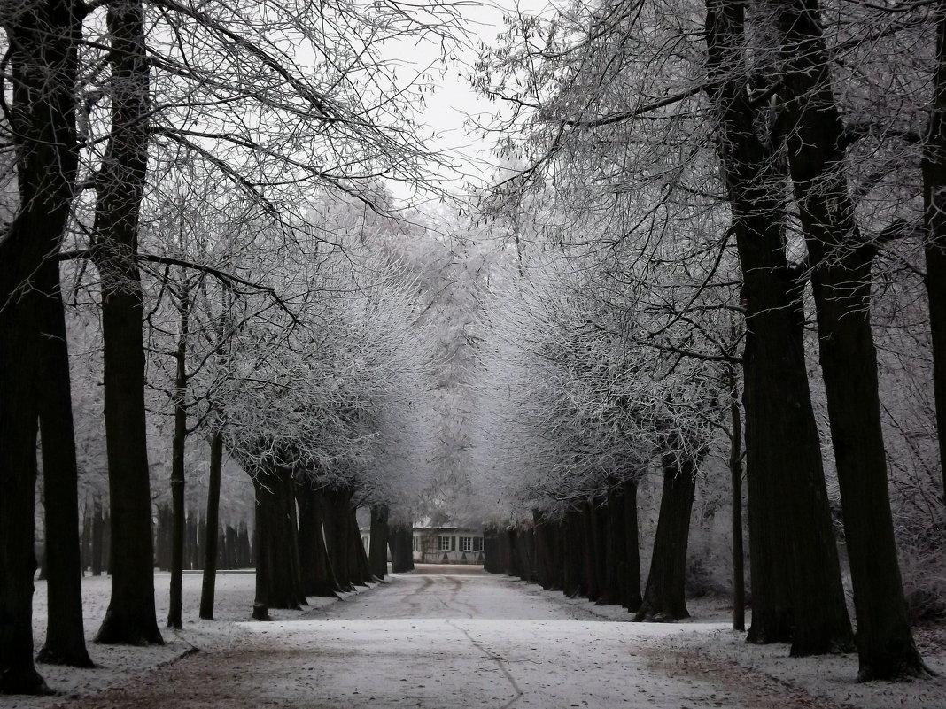 Зимний парк.. - Эдвард Фогель