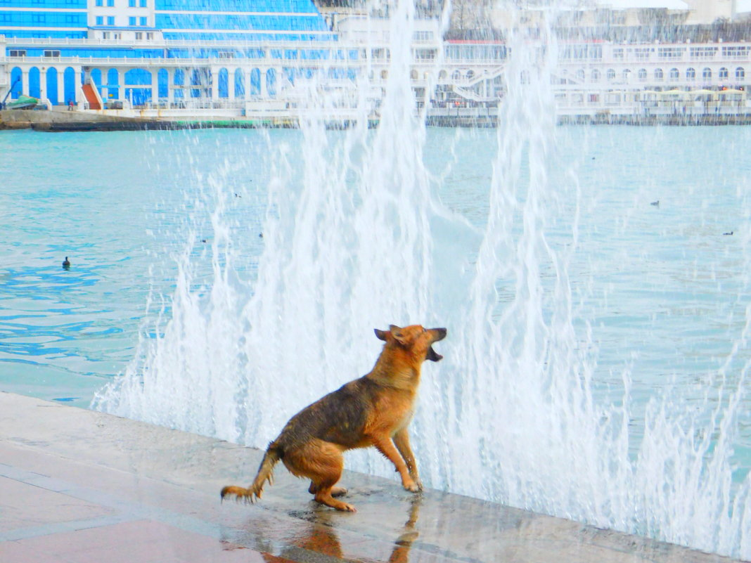 каждый день эта собака - Ярослав Мунин