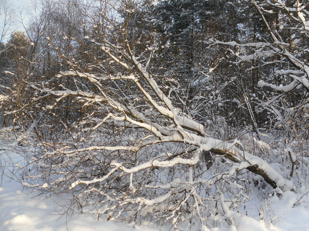После снегопада - Наталья