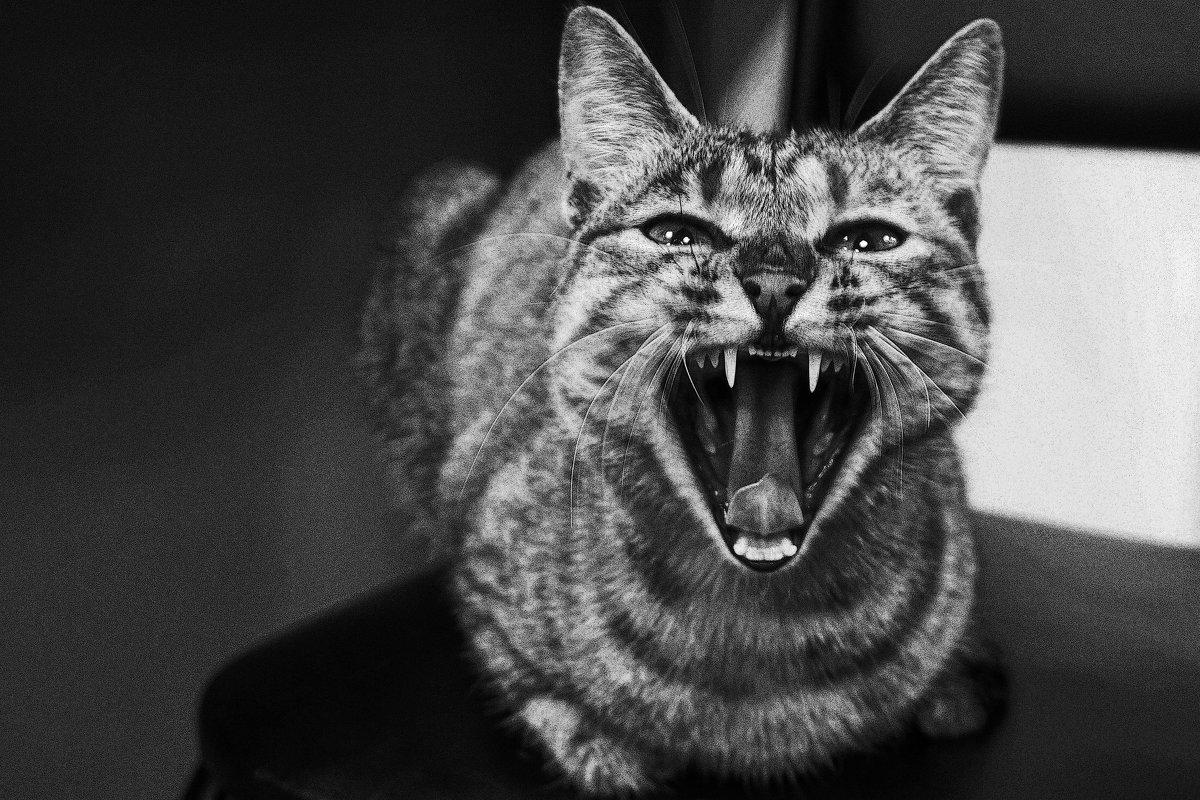 """Улыбка """"будущего тигра""""...., или """"""""хотите зубы покажу?)... - Арина"""