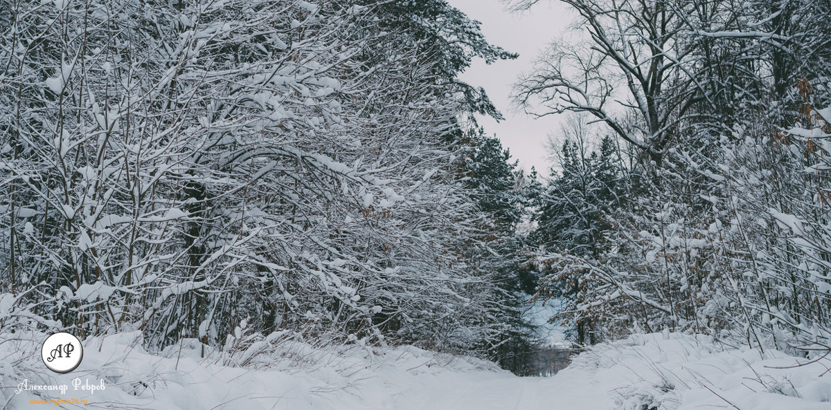 Зима - Александр Ребров