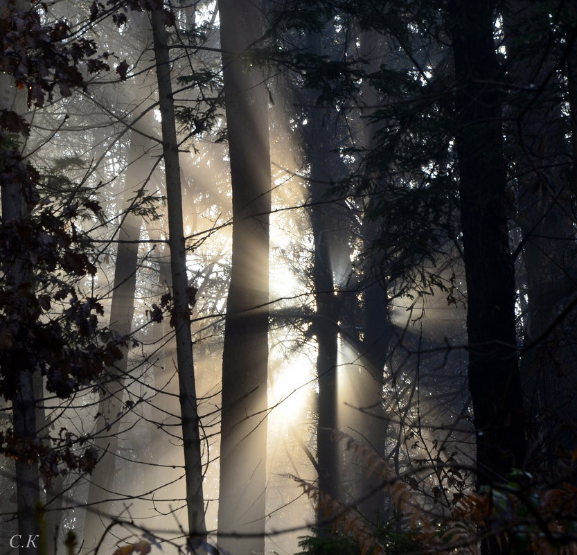 солнце в лесу 2 - Сергей Короленко