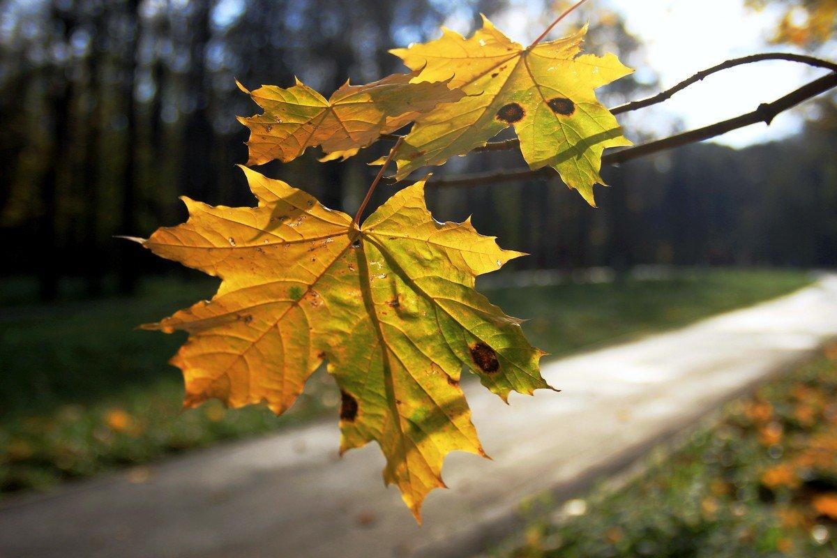 Еще вчера, на солнце млея, дрожал от ветра желтый лист. - Инна Щелокова