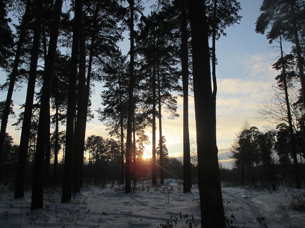Закат в лесу. - Valentina