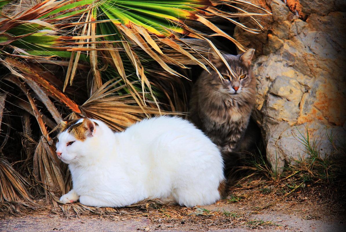 Приморские кошки - Николай Волков