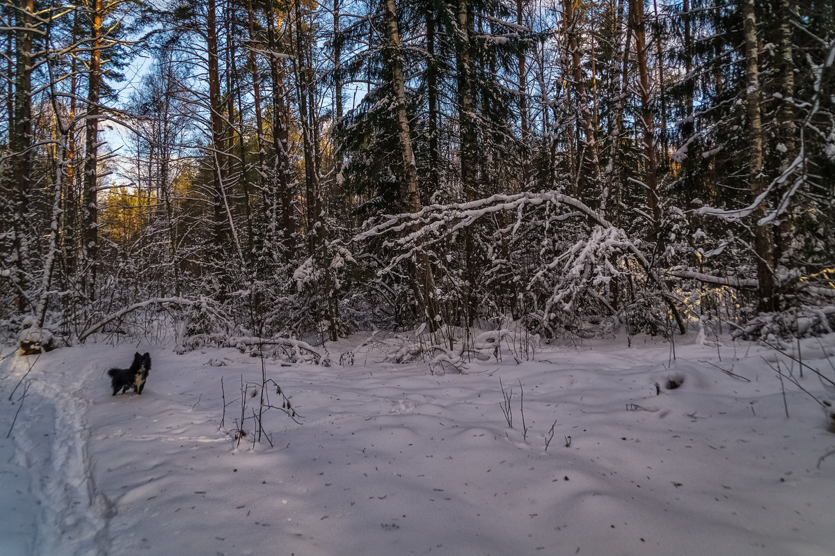 Чёрная собака на белом снегу - Андрей Дворников