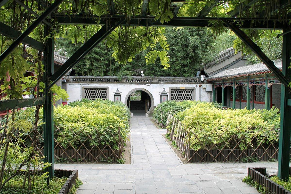 В пионовом саду - Люсенда