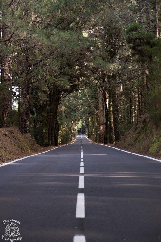 Лесная Дорога в лесу Надежды - Bogdan Snegureac