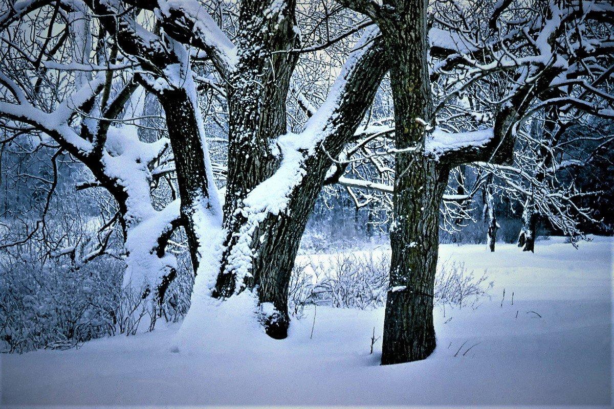В зимнем парке села Никольское - Валерий Талашов