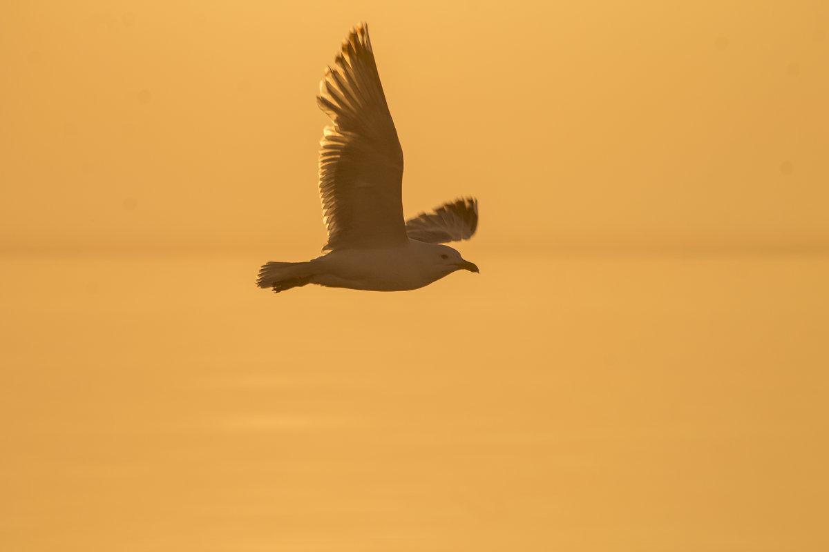 Чайка над Ладожским озером - Алексей Горский