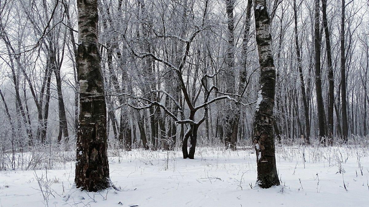 Черно-белый декабрь - Милешкин Владимир Алексеевич