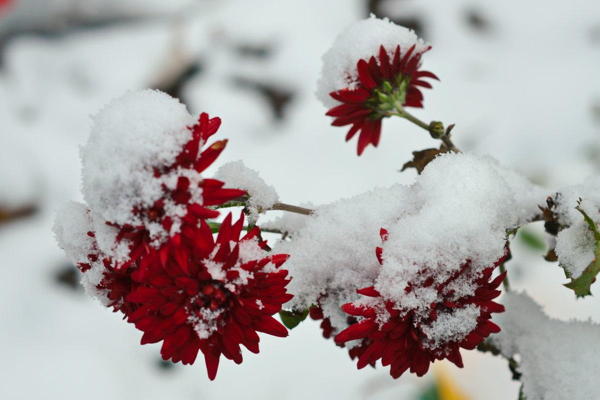 Красное на белом - Татьяна