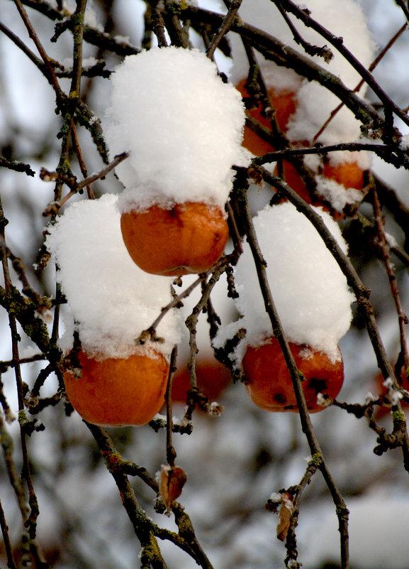 Яблоки в снегу - Виталий Бененко