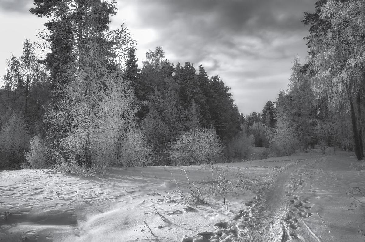 Морозный день - vladimir Bormotov