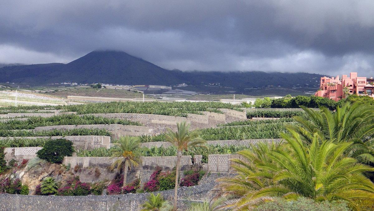 Плантации бананов и вулкан Тейде у отеля Abama Golf & Spa Resort 5* - Елена Павлова (Смолова)