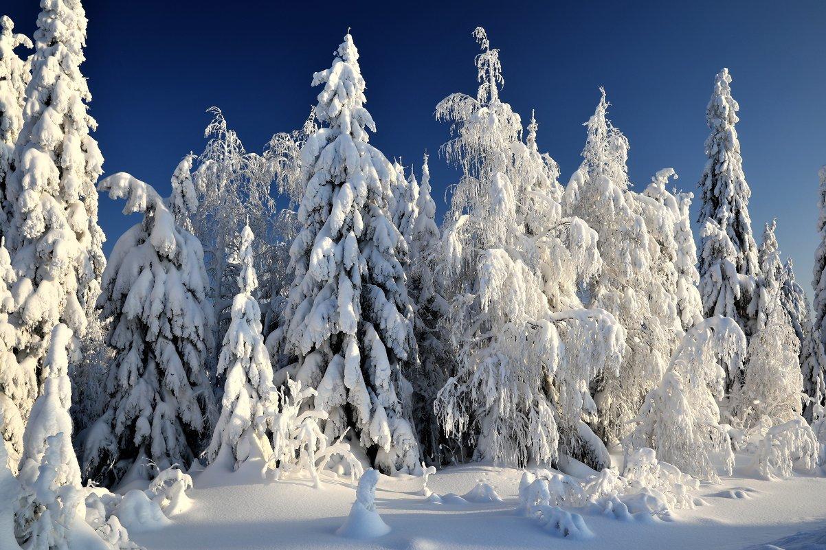 Утро в Рождествинском лесу - Анатолий