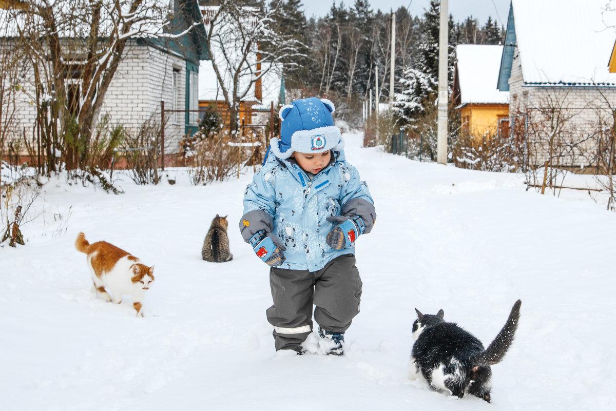 Коты и мальчик на даче зимой - doctor13 Костеневич