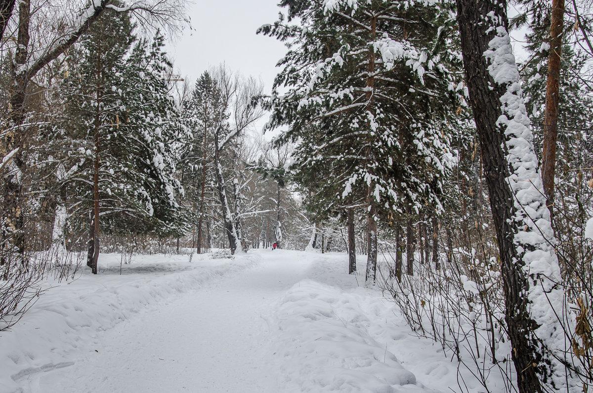 Зимний парк - andrey