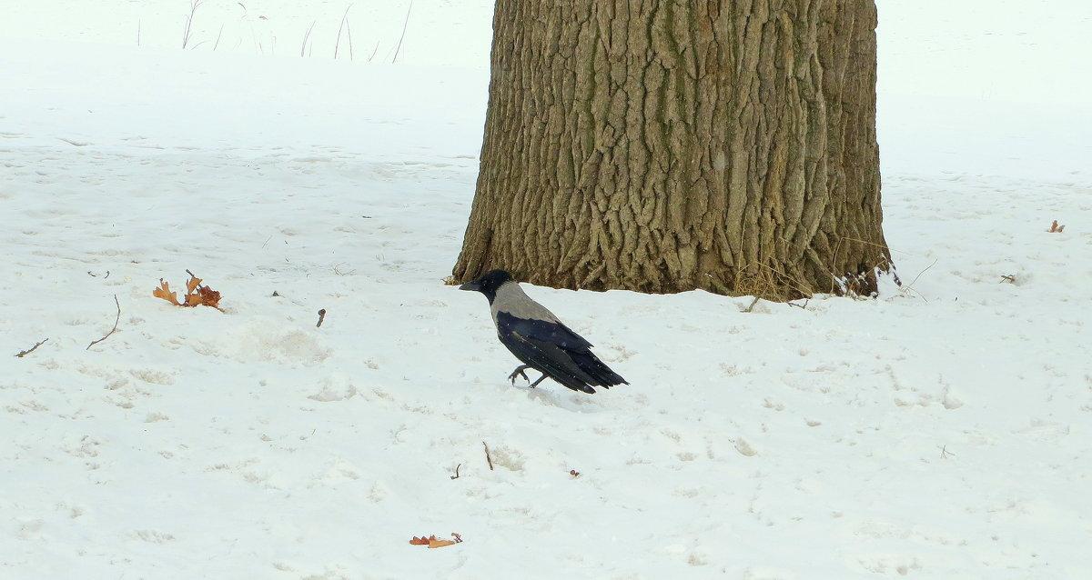 Одинокая ворона - alemigun