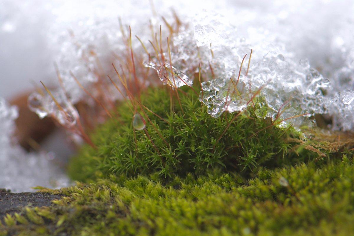 Лед и жизнь - Руслан