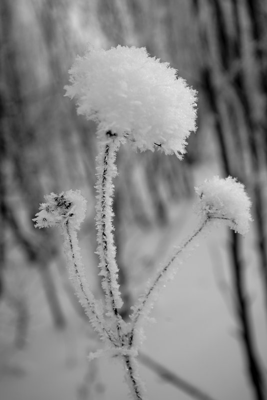 Цветок для Снежной Королевы - Сергей