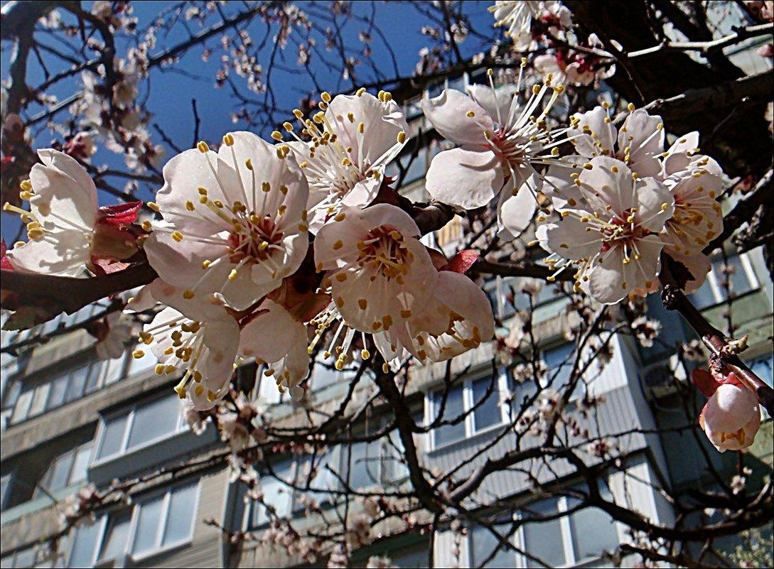 Мечтаю о весне... - Нина Корешкова